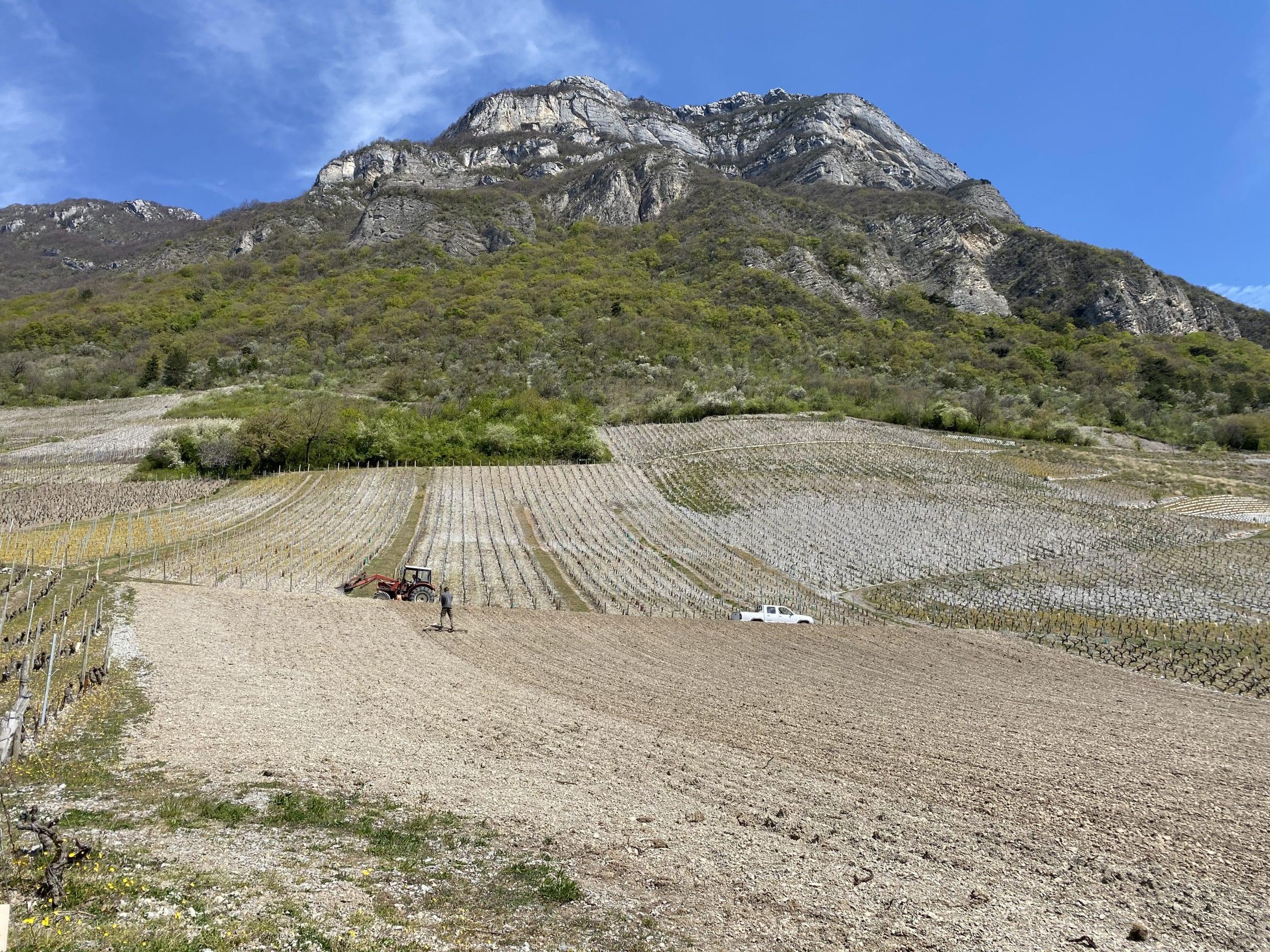 SAVOYARDE PLANTATION PETITE ARVINE CHIGNIN COTEAU DE TORMERY