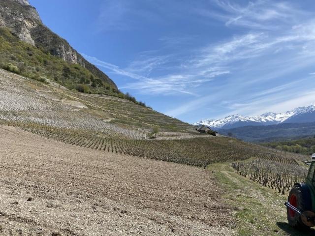 tormery-chignin-quenard-vigne-arvine