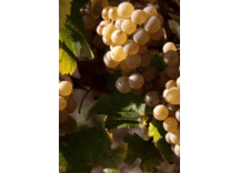 vin de Chignin